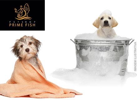 Seu cão com os cuidados que ele merece! Banho e Tosa no Prime Fish Pet Shop, por apenas 17,50.