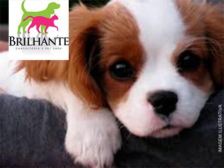 Banho, Tosa Higiênica, Corte de Unha, Vermifugação + Orientação Veterinária no Pet Shop Brilhante por apenas 25,00.
