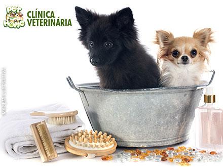 Banho para Cães de Pequeno Porte (De até 10kg) na Pet Home Clínica Veterinária, por apenas R$ 19,90.