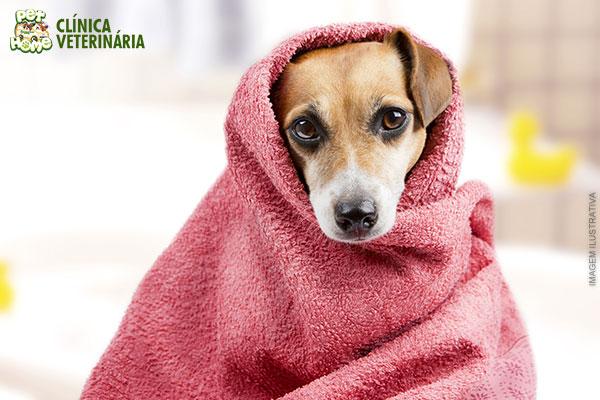 Banho + Tosa Higiênica + Hidratação + Corte de Unhas + Escovação de Dentes + Limpeza de Ouvidos (Cães de Pequeno Porte): 24,90.