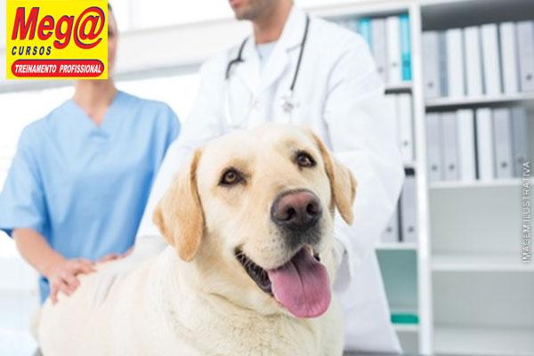 Mini Curso Pet de Auxiliar Veterinário com Banho & Tosa + Certificado na Mega Cursos, por apenas 39,90.
